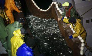 Eurodeputados aprovam acordo de pesca com Senegal que abarca navios portugueses