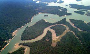 Floresta amazónica está a tornar-se uma fonte de CO2 - estudo
