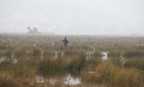 Proibição da caça à rola-comum
