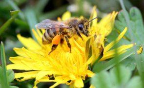 Apicultores têm que declarar apiários em setembro