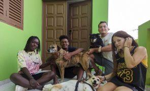 Receitas de hostel no Mindelo ajudam associação cabo-verdiana a defender animais