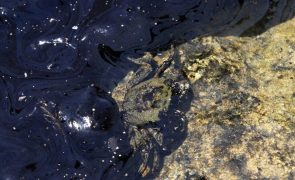Mancha de petróleo ameaça costa norte de Chipre