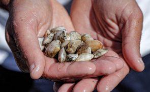 Polícia espanhola desmantela organização que importava ilegalmente moluscos de Portugal